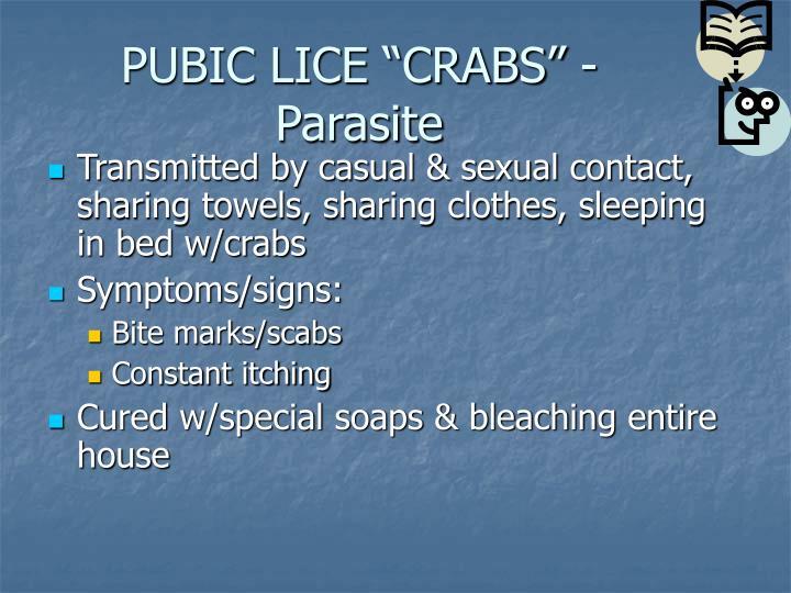 """PUBIC LICE """"CRABS"""" - Parasite"""