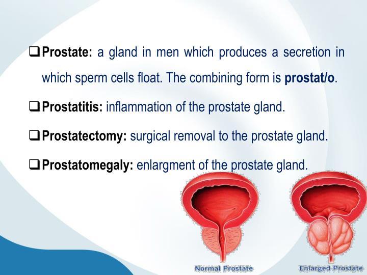 Prostate: