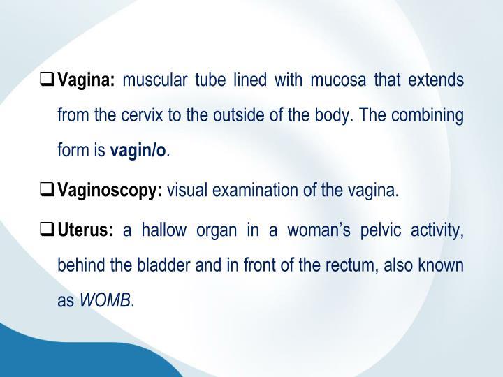 Vagina: