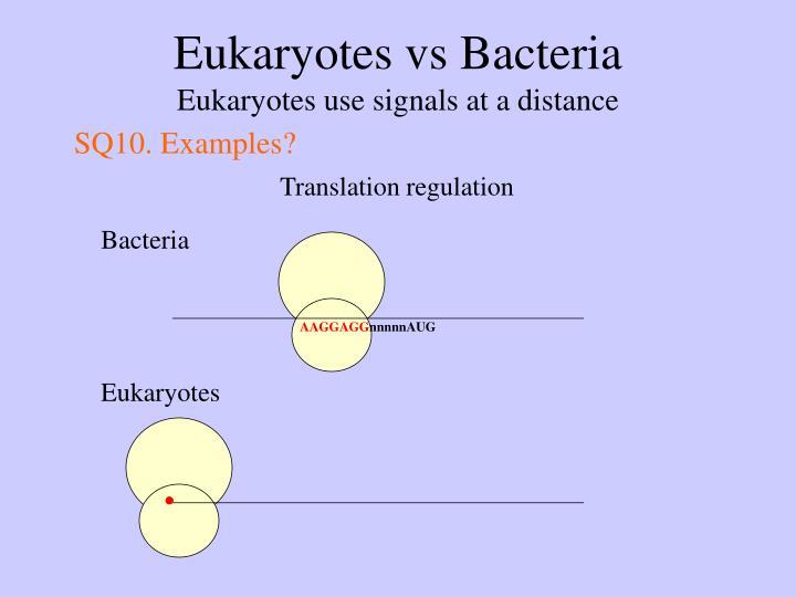 Eukaryotes vs Bacteria