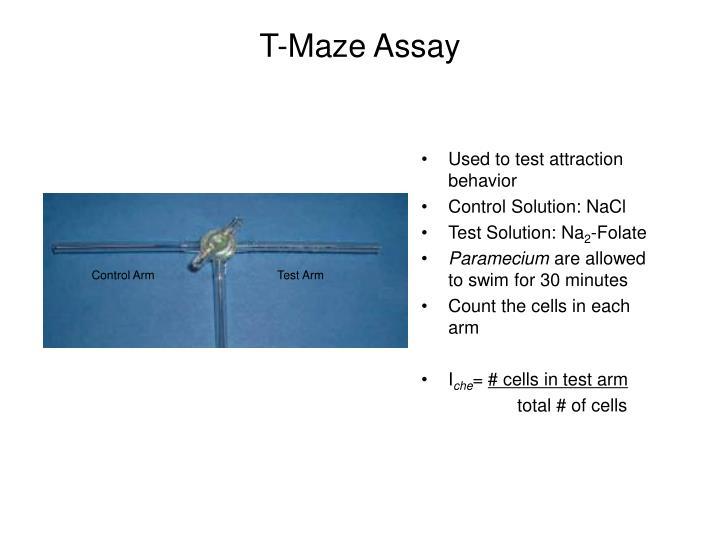 T-Maze Assay