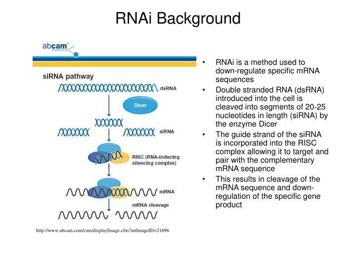 RNAi Background