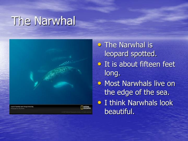 The Narwhal