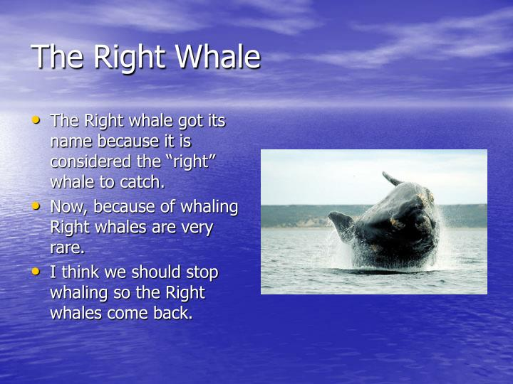 The Right Whale