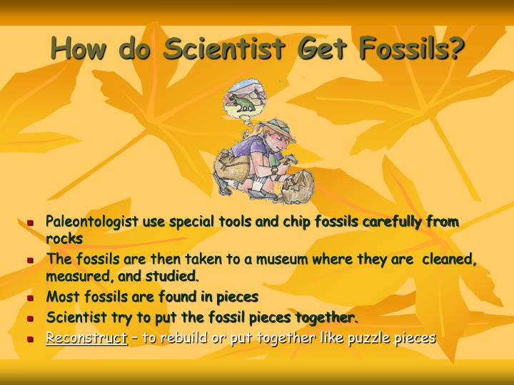 How do Scientist Get Fossils?