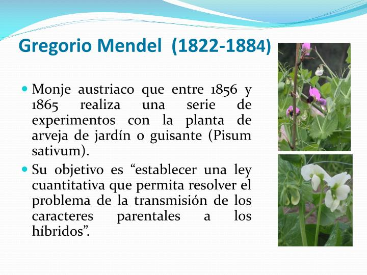 Gregorio Mendel  (1822-188