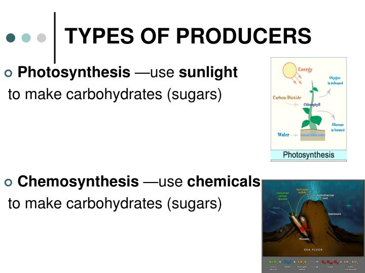 producers of chemosynthesis Producer vs consumer by some producers rely on energy from chemicals rather than the sun they convert energy into their food through the process of chemosynthesis.
