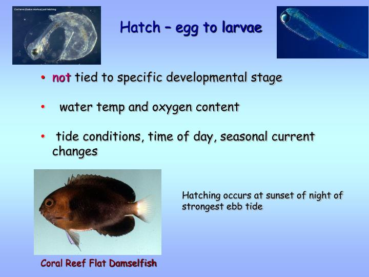 Hatch – egg to larvae