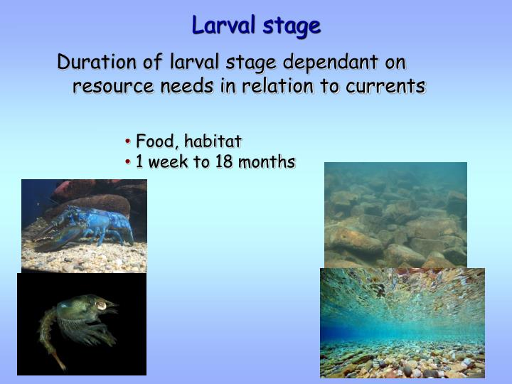 Larval stage
