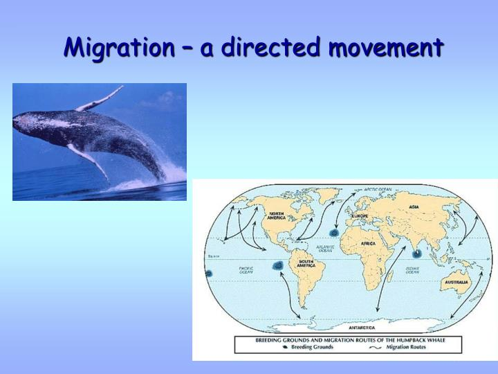 Migration – a directed movement