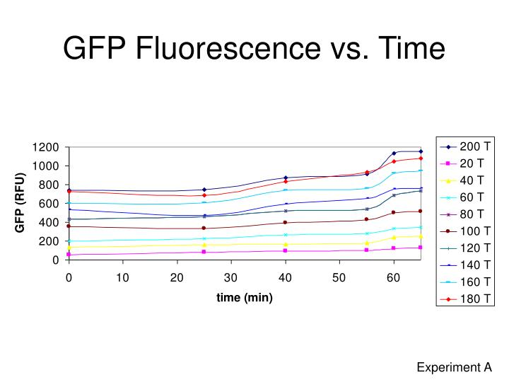 GFP Fluorescence vs. Time
