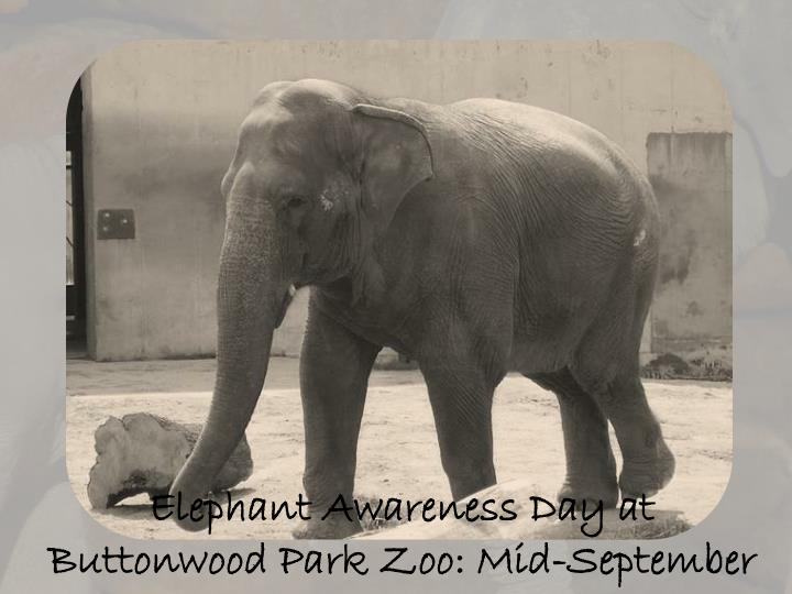 Elephant Awareness Day at Buttonwood Park Zoo: Mid-September
