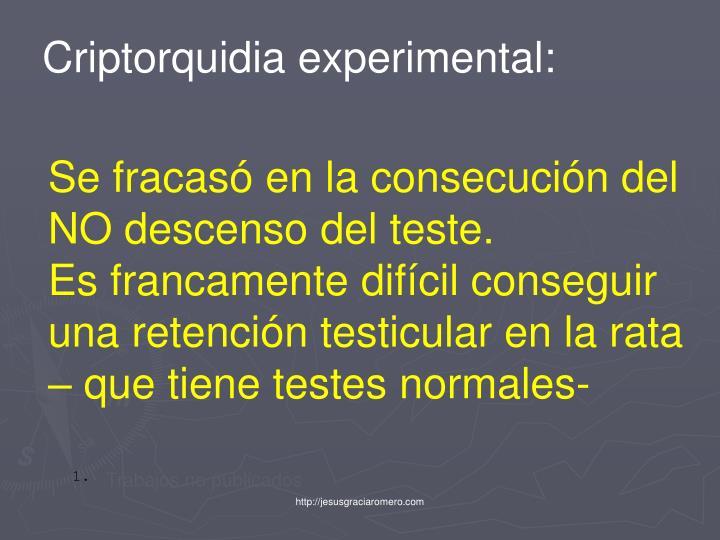 Criptorquidia experimental: