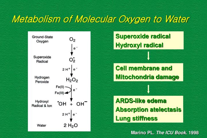 Metabolism of Molecular Oxygen to Water