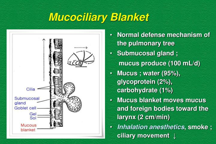 Mucociliary Blanket