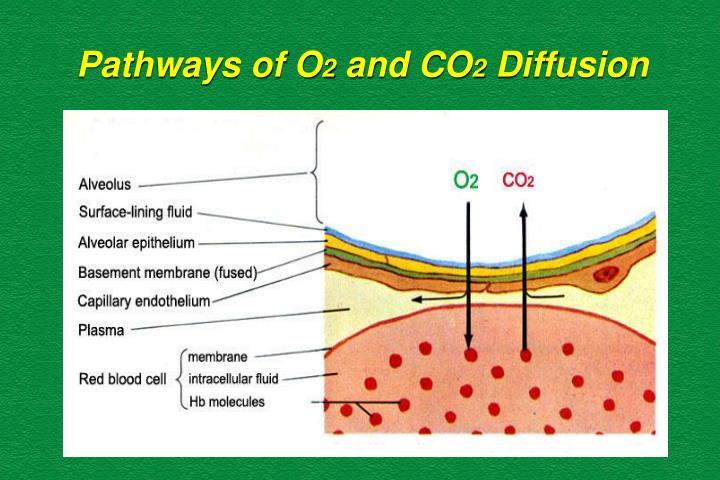 Pathways of O