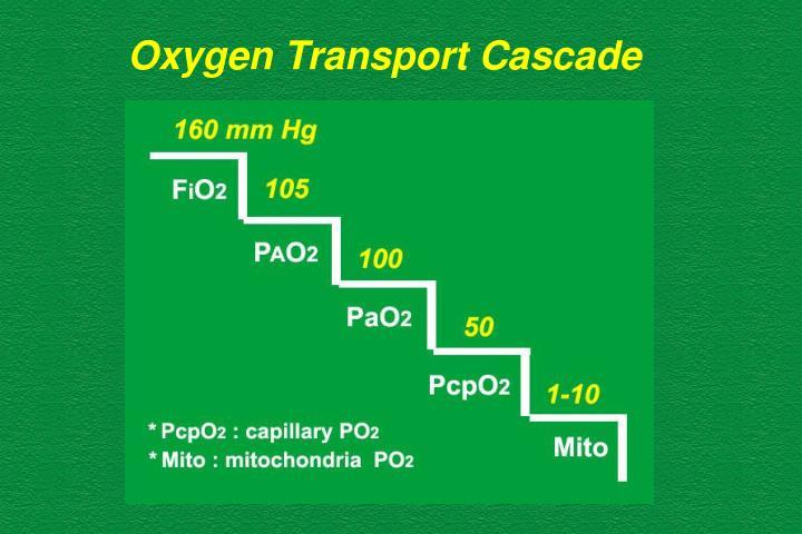 Oxygen Transport Cascade