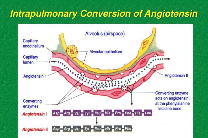Intrapulmonary Conversion of Angiotensin