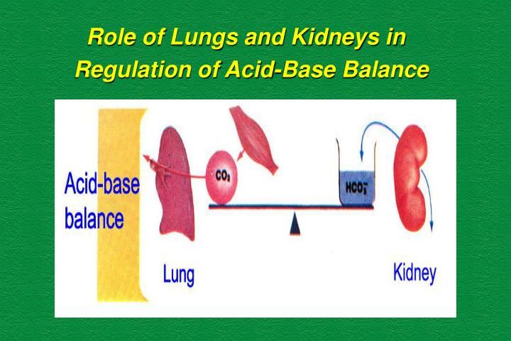 Role of Lungs and Kidneys in
