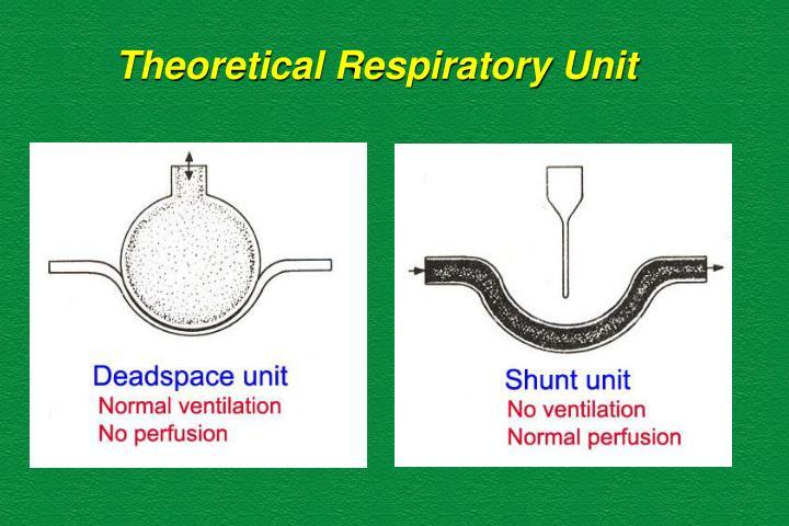 Theoretical Respiratory Unit