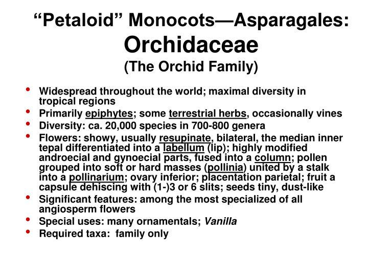 """""""Petaloid"""" Monocots—Asparagales:"""