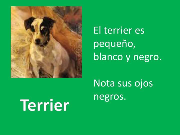 El terrier
