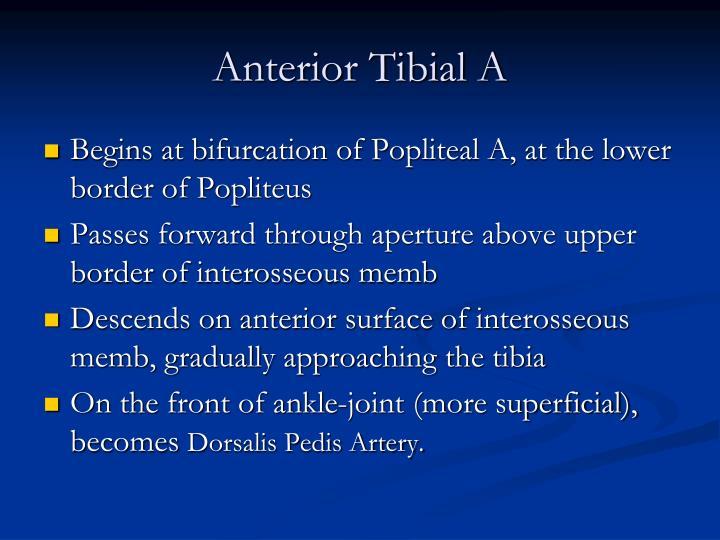 Anterior Tibial A