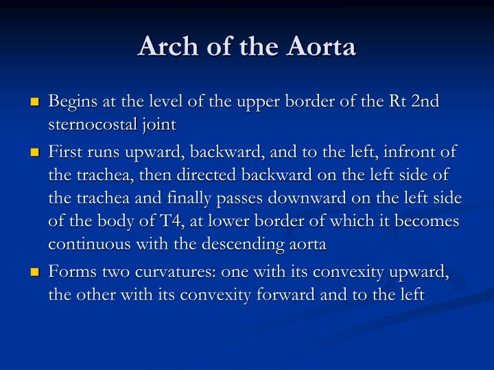 Arch of the Aorta