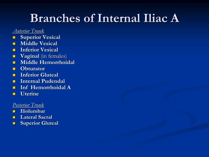 Branches of Internal Iliac A