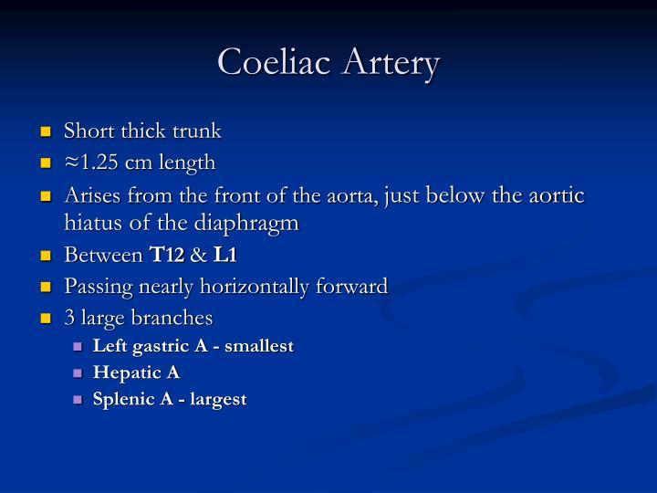 Coeliac Artery