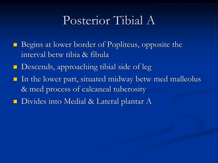 Posterior Tibial A