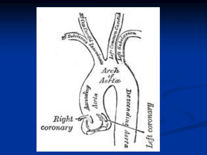 Aorta and peripheral arteries anatomy visualization