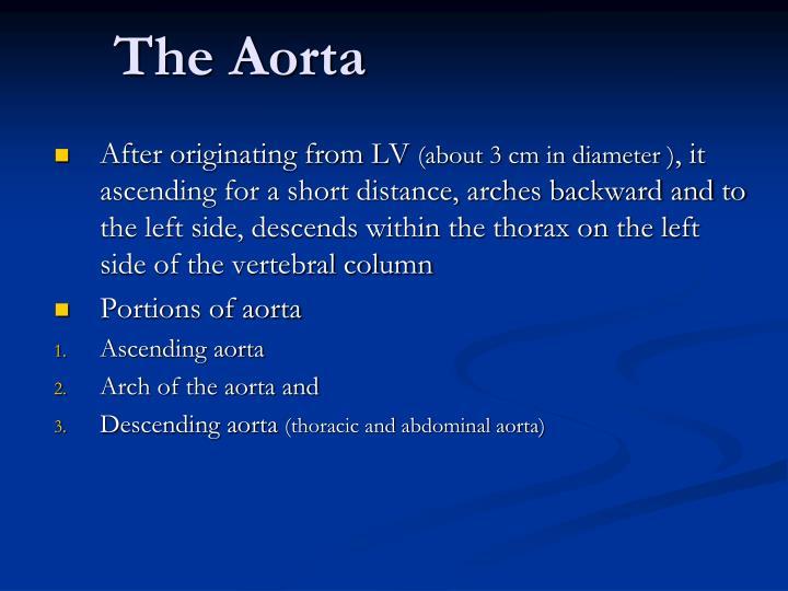 The Aorta