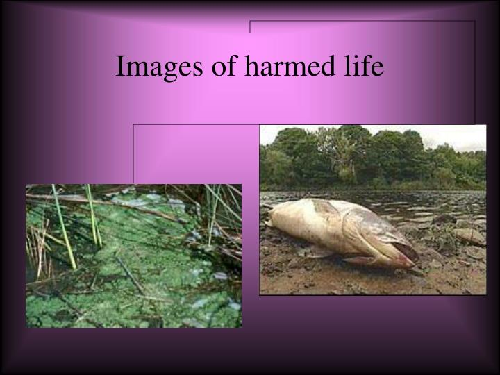 Images of harmed life