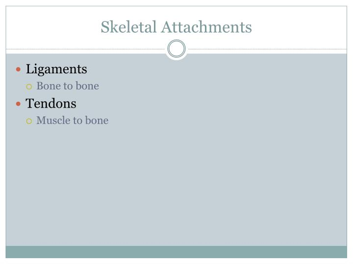 Skeletal Attachments