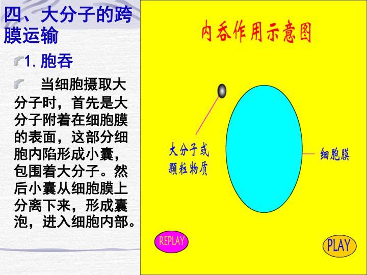 四、大分子的跨膜运输