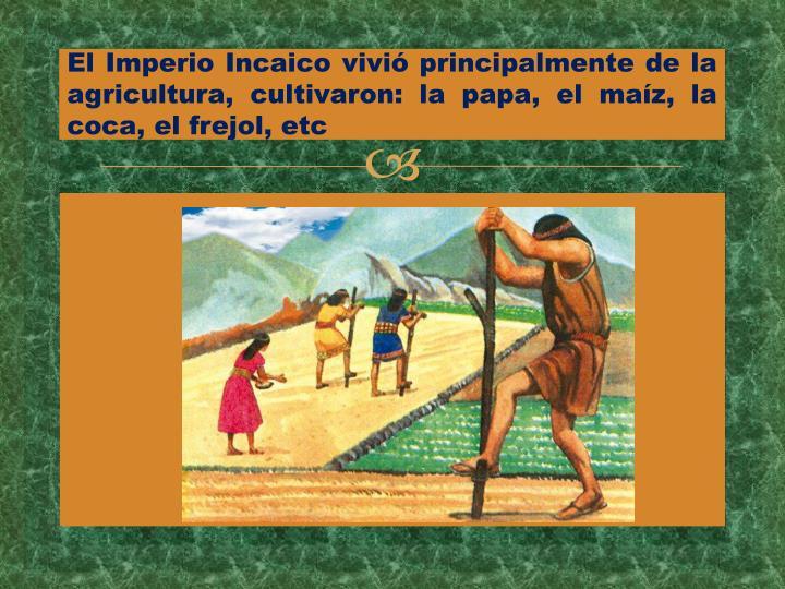 El Imperio Incaico vivió principalmente de la agricultura, cultivaron: la papa, el maíz, la coca, el frejol, etc