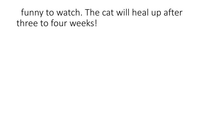 funny to watch. The cat will heal up after three to four weeks!