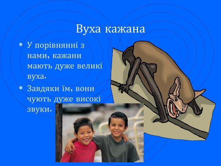 Вуха кажана