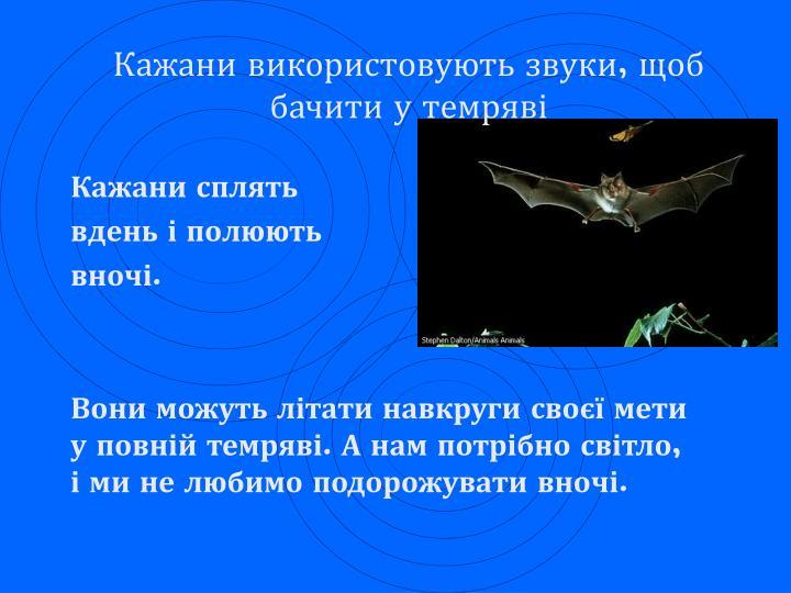 Кажани використовують звуки, щоб бачити у темряві