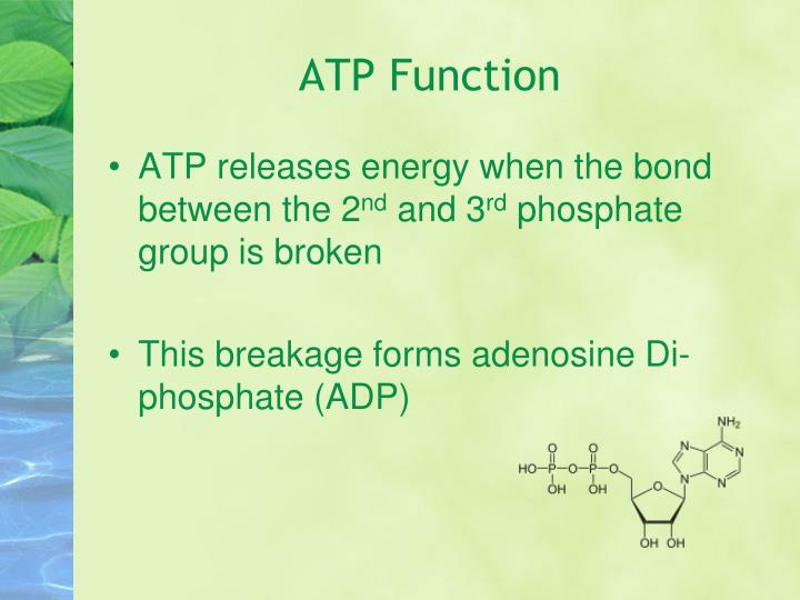 ATP Function