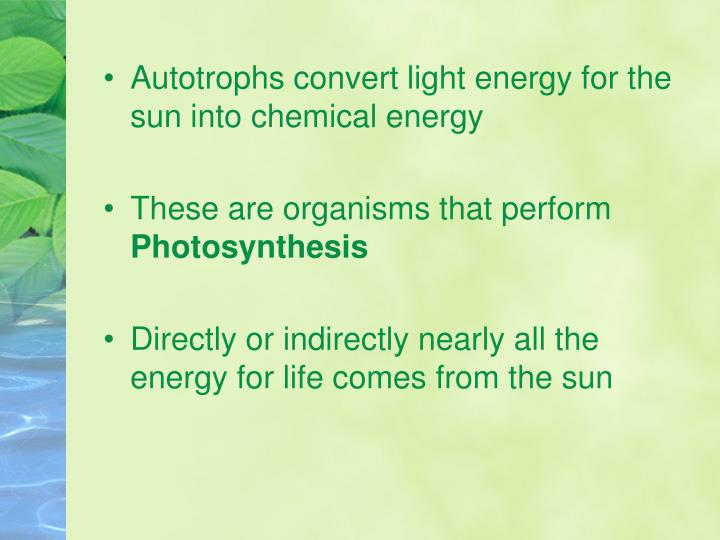 Autotrophs convert light energy for the sun into chemical energy