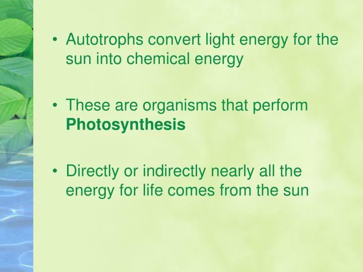 Autotrophs convert light energy for the sun into chemical energy