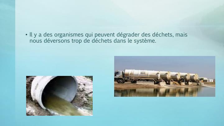 Il y a des organismes qui peuvent dégrader des déchets, mais nous déversons trop de déchets dans le système.