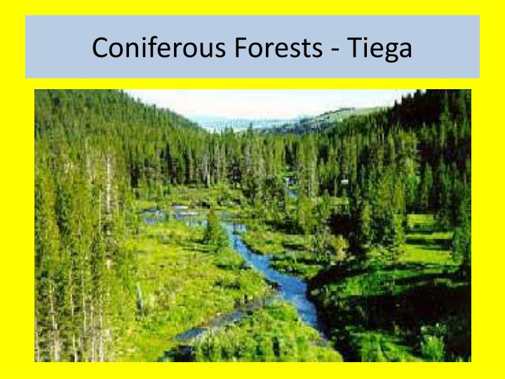 Coniferous Forests -