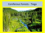 coniferous forests t iega