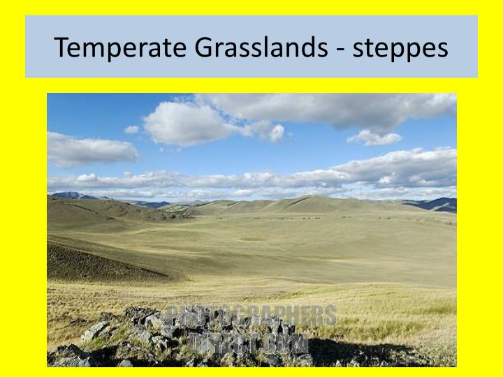 Temperate Grasslands - steppes