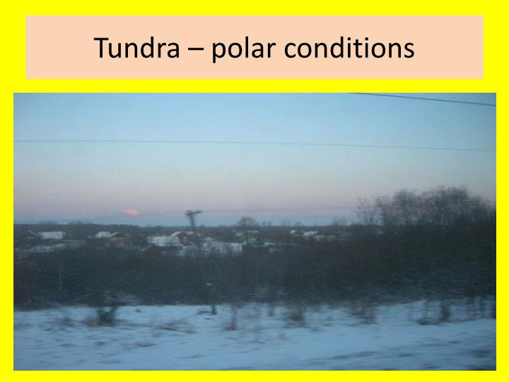 Tundra – polar conditions