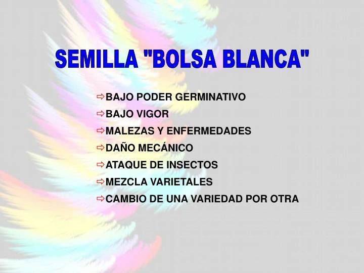 """SEMILLA """"BOLSA BLANCA"""""""