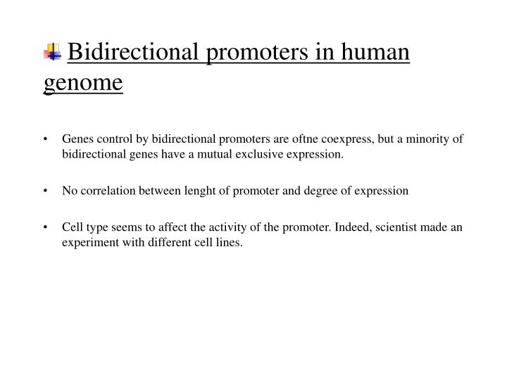 Bidirectional promoters in human genome